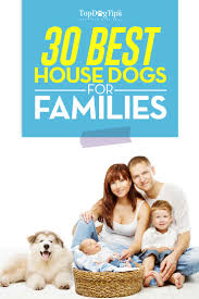 Small Non Shedding Dogs For Seniors by 30 Breeds That Are Good House Dogs Perfect For Families