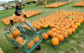 The Great Pumpkin Patch Arthur Il by It U0027s Fall Y U0027all Pumpkin Patches And Orchards In Central Illinois