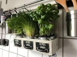 frische kräuter in der küche küchenkräuter küchenkräuter