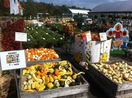 Pumpkin Picking Places In South Jersey by Best 25 Pumpkin Picking Nj Ideas On Pinterest Pumpkin Farm