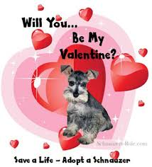 Go From Puppy Dog Valentine To About The Miniature Schnauzer On Schnauzers Rule