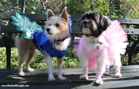 Tompkins Square Park Halloween Dog Parade 2015 by Fierce Fashion Abounds At The Tompkins Square Park Dog Halloween