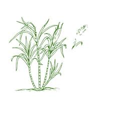 Sugar Cane Clipart Cliparts Of Free Download Wmf Eps Emf Svg Png Gif Formats