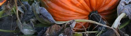 Pumpkin Patch Medford Oregon 2015 by Smith Rock Ranch U2013
