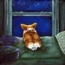 1000 images about Corgi love on Pinterest