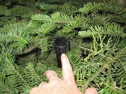 Xmas Tree Waterer by Christmas Tree Watering Hack