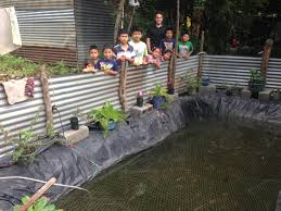 Tilapia Ponds Backyard Tilapia Fish Farm August 192011 Update Youtube Fish Farming How To Make It Profitable For Small Families Checking Size Backyard Catfish To Start A Homestead Or Commercial Tilapia In Earthen Pond 2017 Part 1 Preparation And Views Of Wai Opae Tide Pools From Every Roo Vrbo Sustainable Dig Raise Bangkhookers Fishing Thailand An Affordable Arapaima In Your Home Worldwide Aquaponics Garden Table Rmbdesign Guide Building A Growing Farm Sale Farming Pinterest
