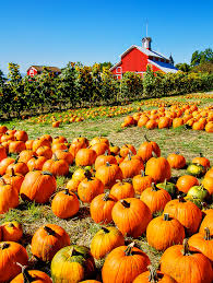 Southern Ohio Pumpkin Patches by Fall Anniversary Celebration At A Pumpkin Farm With A Barn For A