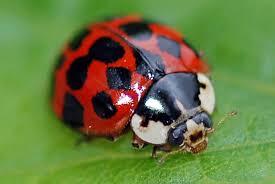 100 Ladybird Food Truck Discosatitlan