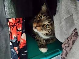 service cats cat sitting service rates los angeles just for cats pet sitting