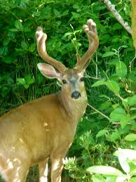 Does Deer Shed Their Antlers by The Stories Keep Coming Yoga By Fran Galloyoga By Fran Gallo