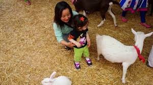 Pumpkin Patch With Petting Zoo by Petting Zoo At The Sepulveda Pumpkin Patch 10 16 2016 Youtube