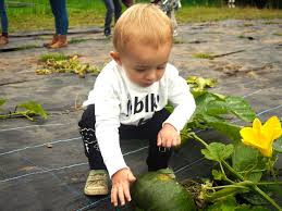 Pumpkin Picking Pa by Autumn Fun And Pumpkin Picking At Hendrewennol Baby Holiday