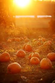 Pumpkin Patches In Oklahoma by These Are The Best Pumpkin Patches In Every Southern State