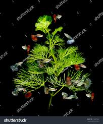 Dragon Ball Z Fish Tank Decorations by Christmas Tree Underwater Concept Guppy Fish Stock Photo 115607254