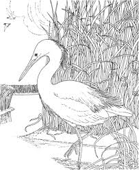 Click To See Printable Version Of Whooping Crane Bird Coloring Page