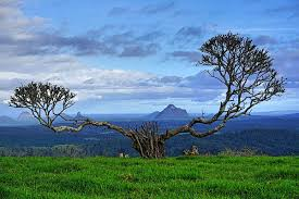 100 Tree Houses Maleny Susan Maynard On Twitter Its Not The Famous One Hill