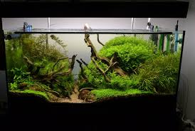Cuisine: Best Images About Aquascaping On Haunted Forest Aquascape ... Cuisine Perfect Aquascape Aquarium Designs Ideas With Hd Backyard Design Group Hlight And Shadow Design For Your St Charles Il Aqua We Share Your Passion For Success Classic Series Grande Skimmer Aquascapes Amazoncom 20006 Aquascapepro 100 Submersible Pump Pond Supply Appartment Freshwater Custom 87 Best No Plant Images On Pinterest Ideas