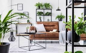 jungle trend 5 tipps wie deine wohnung grüner wird