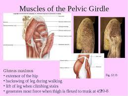 65 best pelvic floor health images on pinterest pelvic floor