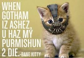 cat batman costume 10 creative cat costumes for the purrrfect