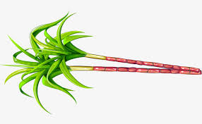 Green Simple Plant Sugar Cane Clipart PNG Image And