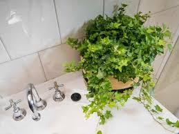 badezimmer gestalten und dabei eine tropenoase entstehen