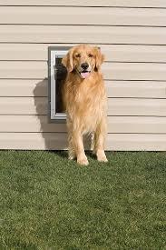 Doggie Door For Patio Door Canada by Amazon Com Petsafe Wall Entry Aluminum Pet Door With Telescoping