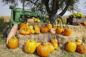 Pumpkin Patch Iowa City by This Season Autumn Brings Corn Mazes Pumpkin Patches The Gazette