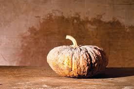 Dills Pumpkin Patch Columbus Ohio by Is A Pumpkin A Squash Understanding Cucurbitas Plant Profiles