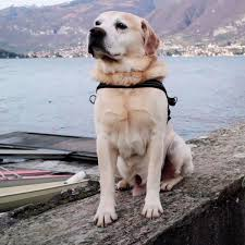 Valentine Mini Sessions Dogma Dog Care Smyrna GA Nina Parker Pets