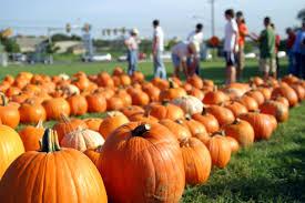 Ohio Pumpkin Festival by Cheviot Hills La Harvest Festivals
