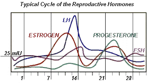 lh blood test normal range fsh level chart during cycle menstrual cycle bioninja ratelco