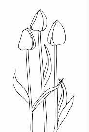 Great Printable Tulips Flower Coloring Pages With Tulip And Poplar