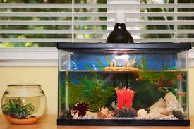 Extra Large Aquarium Decorations by Causes And Fixes For Yellow Or Brown Aquarium Water