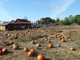 Roloff Pumpkin Patch by Smith Stories Roloff Farms