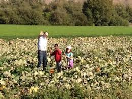 Cal Poly Pumpkin Patch San Luis Obispo by Talley Vineyards Blog