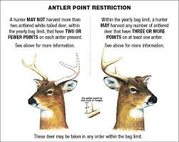 Deer Antler Shedding Cycle by Everything About Deer Antlers