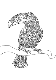 Printable Adult Coloring Page Toucan Toucanet Clipart Coloring