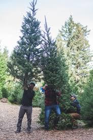 Santa Cruz Christmas Tree Farms by Tree Chopping Natalie Dressed A Santa Cruz Life Style Blog