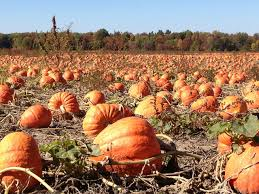 Pumpkin Patch Sf by Pick A Pumpkin Patch In Middle Tennessee Traveling Mom