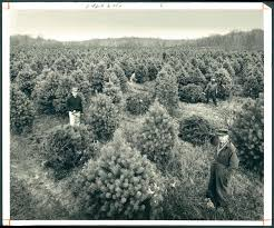 Baltimore County Christmas Tree Collection by Vintage Baltimore Holiday Pictures