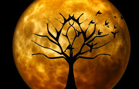 Poems About Halloween For Adults by Prayers For Halloween