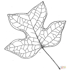 Click The Tulip Tree Leaf Coloring Pages