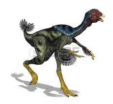 The Caudipteryx Was A Feathered Bird Like Dinosaur That Size Of