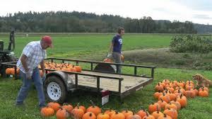 Pumpkin Patch Corn Maze Snohomish Wa by Bailey Vegetables Pumpkin Patch Snohomish Wa