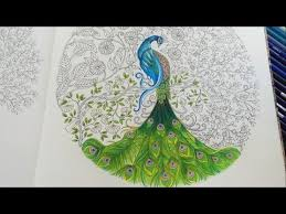 Peacock Part 3