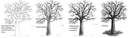 pen and ink tutorial drawing tree branches in pen and ink