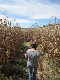 Pumpkin Patch South Bend by A Scary Good Time At Holiday World U0027s Halloween Weekends The