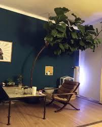 türkischen marokkanischer feigenbaum und gute b